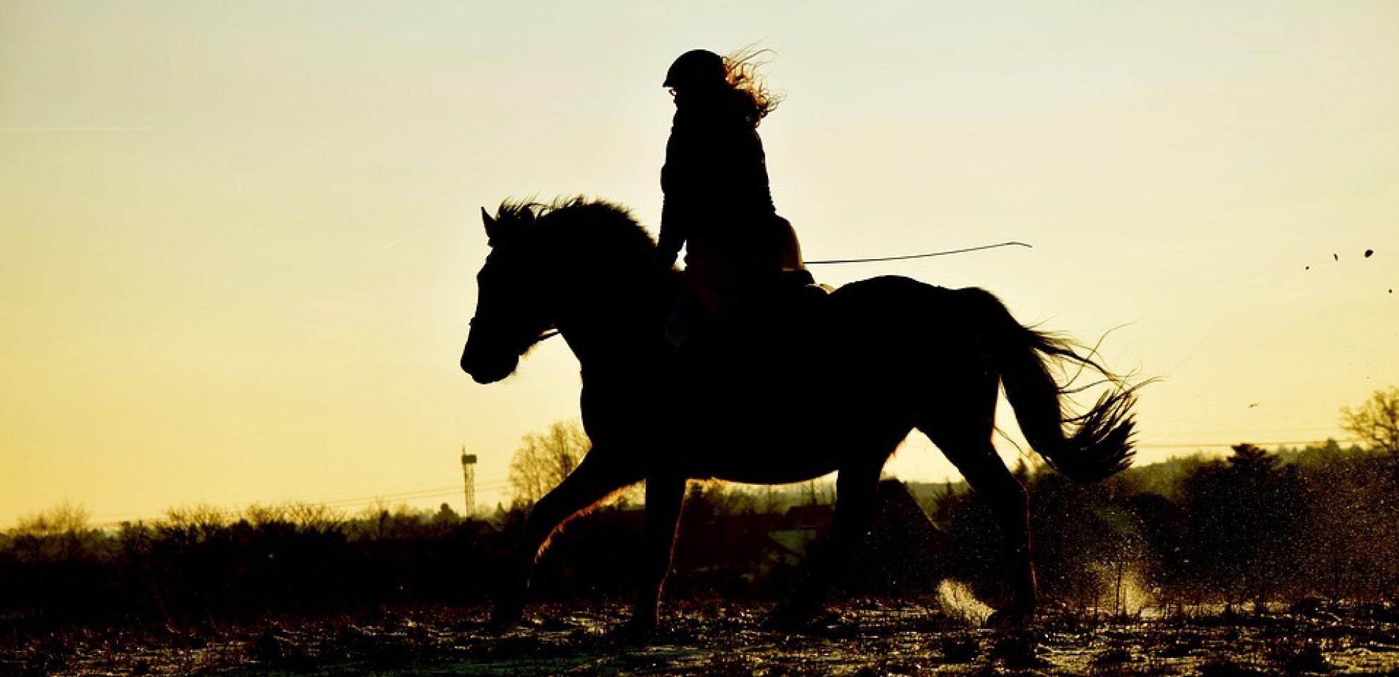 Cropped Gallop Horse Silhouette Sunset Reiter Ride Black 2469007 5 Jpg Tolt Club